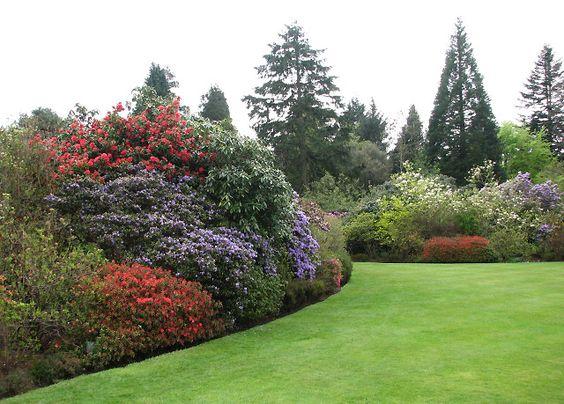 如何创造一个后院美丽的风景