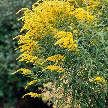 使用这些坚韧的原生植物为您的院子增添低维护美感。
