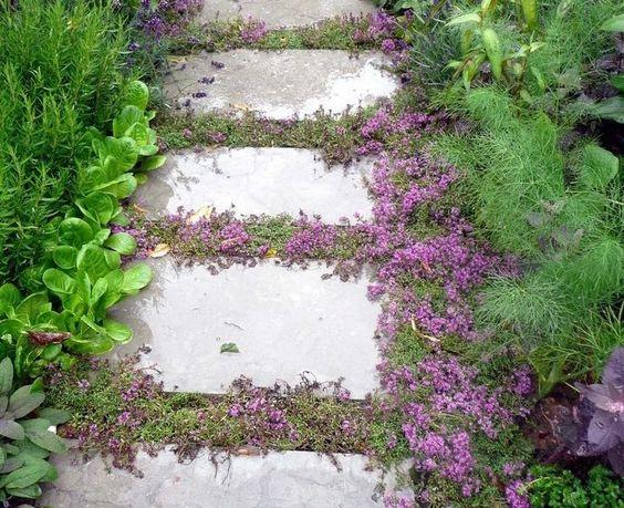 您的路径和人行道十大植物和地面覆盖物