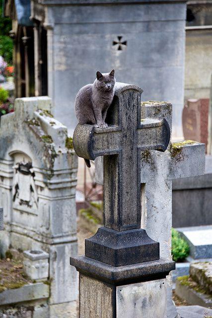 有几只猫在墓地漫游,但是这只猫突出了。