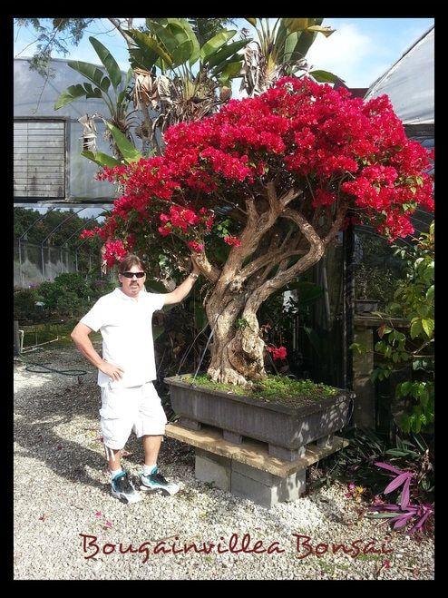 惊人的盆景树在定制手工制作的一种盆景盆