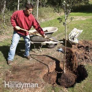 确保您的新树开始使用这些植树技巧。