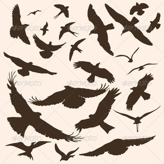 矢量轮廓的鸟类文件类型:jpg,eps