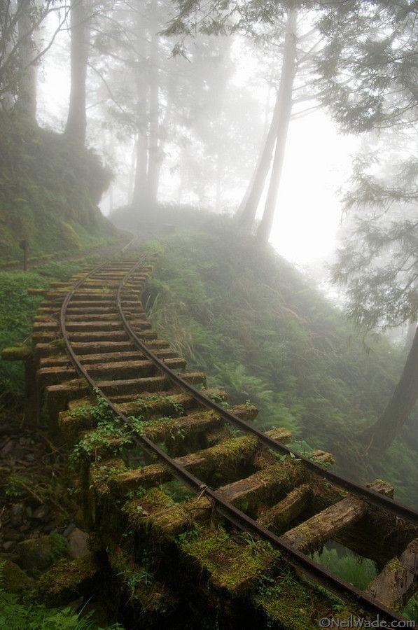 train tracks.    Neat...