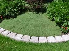 制作百里香草坪,休暑假;没有割草,施肥或大草坪选择大惊小怪...