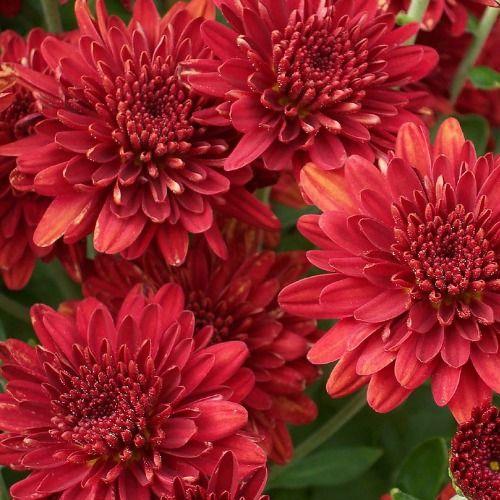 为忙碌的园丁提供10个低维护的多年生植物!您仍然可以拥有漂亮的花坛,而无需花费大量时间来维护它们。