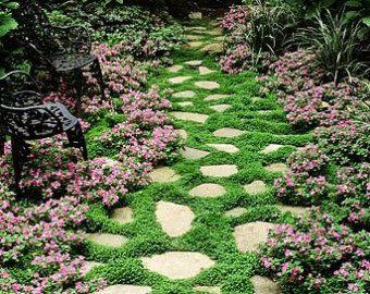 通过SmartSeeds匍匐百里香地面覆盖1000粒种子香草