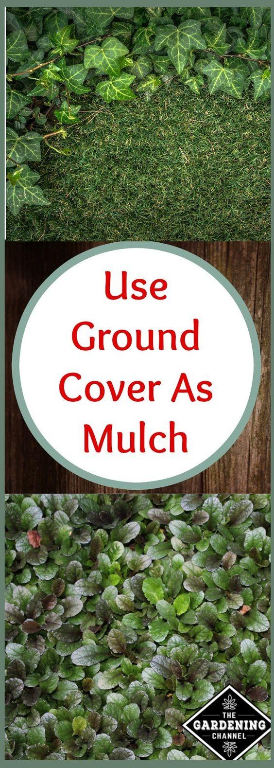 为什么要铺地毯?当园地里有一些坚硬的地方可以欣赏风景时,园丁们通常会转向地被植物,如金钱草,四季豆,三叶草,长春花,小茴香和百里香。地面覆盖物的选择是因为它们的耐寒性,扩散自身的倾向性以及对各种条件的耐受性。这些植物会在别人不会的地方生长。但是,...