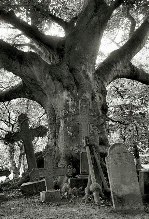 由deviantART上的~Tanja0869的旧公墓