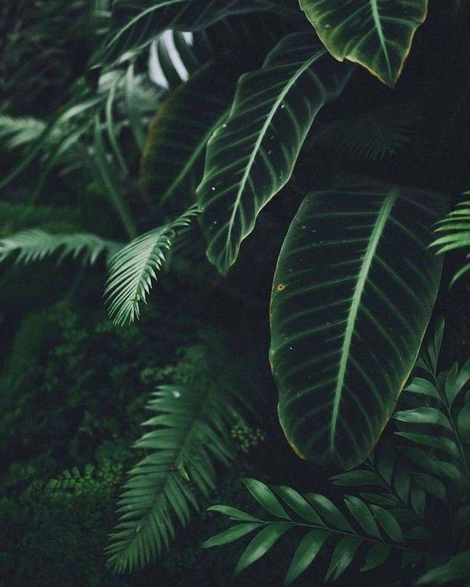 植物/花卉/花园