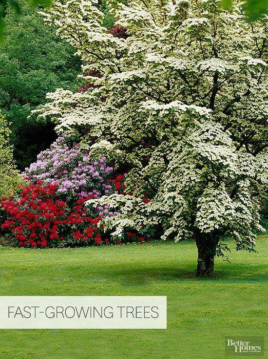 园丁需要快速生长的遮荫树来保护隐私,特别是在树木失去老年或其他因素之后。虽然快速生长的树木遮荫提供了快速的美丽和隔离,但它们可能是短暂的,并且往往具有脆弱的木材,在恶劣天气和冰暴期间可能会破裂。这是如何为您的院子选择最好的遮荫树。