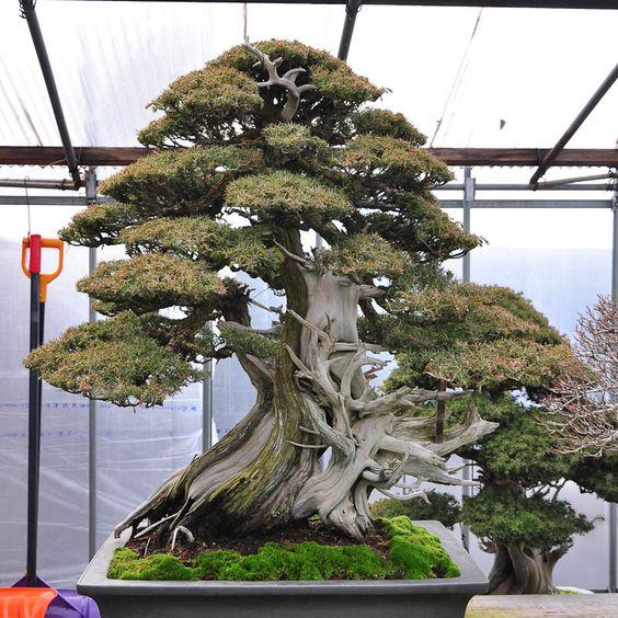 Taikan Bonsai博物馆是Shinji Suzuki的病房,是Hamano的一度学生,现在是该领域最知名的从业者之一。博物馆位于Obuse,拥有一系列出色的盆景。无论如何,访客互相拍摄Benches。博物馆正在从原来的位置搬迁......
