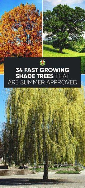 我们为快速生长的遮荫树提供30多种不同的选择,以帮助在今年夏天消除家中的热量,同时还提供美丽和个性。