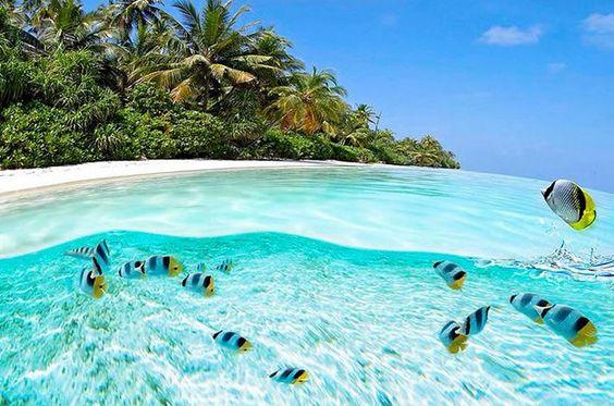 每个人都喜欢在夏天的时候在最清澈的海水中畅游。请查看我们世界上最清澈的35种水域之列表