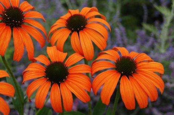 17低维护多年生植物 - 很容易选择容易多年生植物,不需要太多!