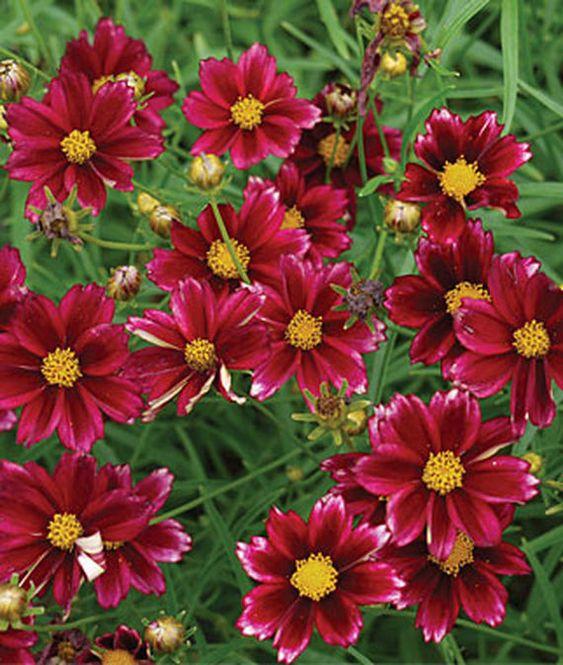"""""""如果你想为你的花园添加颜色,但由于水分限制或短缺而不愿种植多年生植物,那么就考虑种植抗旱多年生植物。这些是多年生植物,一旦你建立了它们,就不需要频繁的饮水。 ..."""