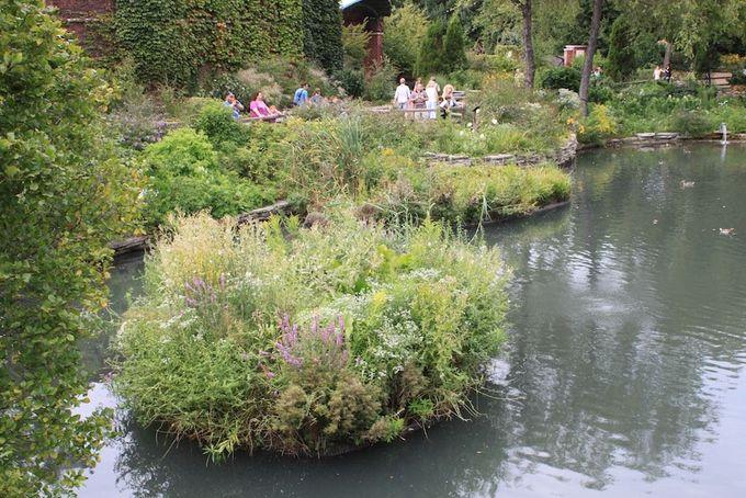 floating wetlands
