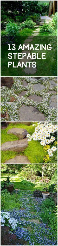 用于通路,岩壁和其他地面覆盖的想法的Stepable植物。这些炖菜对您的院子和风景非常棒。