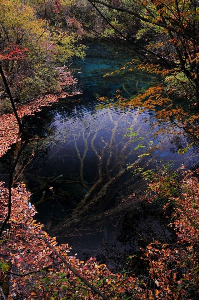 九寨沟流域的水下树
