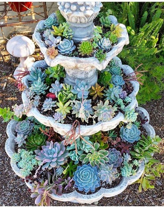 多肉植物是美丽的,独特的园林植物。他们的质地和颜色是一个可靠的方式来打动你的花园并增加一些独特性。你家后院有一个古老的喷泉吗?也许干旱或水的限制不再允许户外喷泉水资源的智能使用。随着景观的想法,后院的想法,并巧妙地使用肉质植物,将其变成一个美丽的童话花园。您仍然可以将喷泉作为花园中的焦点,将其变成一个美丽的多汁花园喷泉。你需要准备好地面