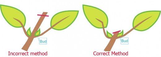 指导解释盆景主要依赖矮化的各种修剪形式;即在休眠期间枝条夹紧,叶夹,根部修剪和修剪。继续阅读以了解矮矮盆景树。
