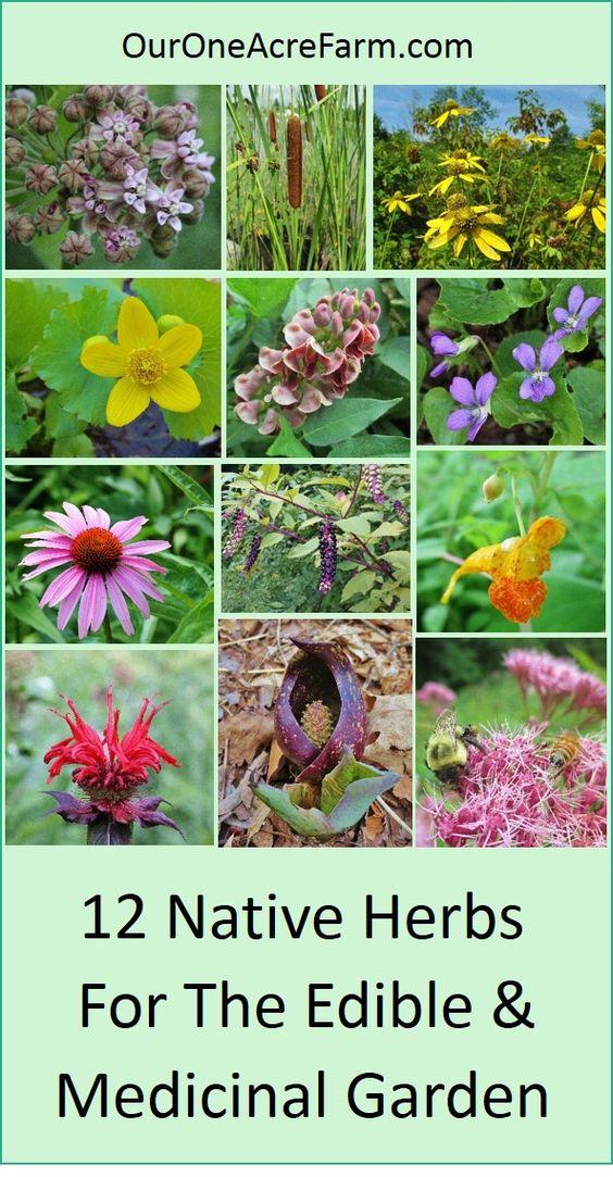 种植这些本地植物的食物和药物,以提供人和野生动物。总结了所有可用性,医药用途和野生生物价值。