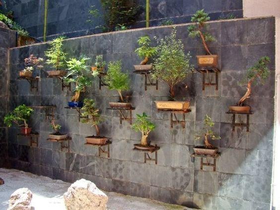 盆栽园艺越来越受到人们的青睐,在这里你种植容器中的小植物,让你的家看起来很棒。