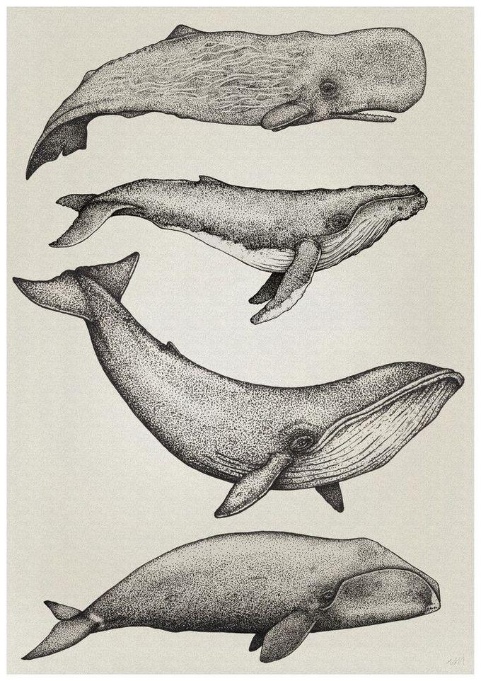 whale illustration - Google-Suche