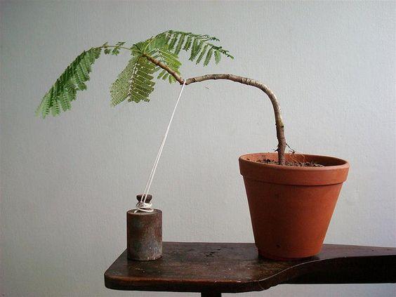 如何种植盆景树。如何照顾你的盆景树。如何种植盆景树指南。讨论如何种植盆景树技巧,技巧和建议。 -  A-Z。怎么做…