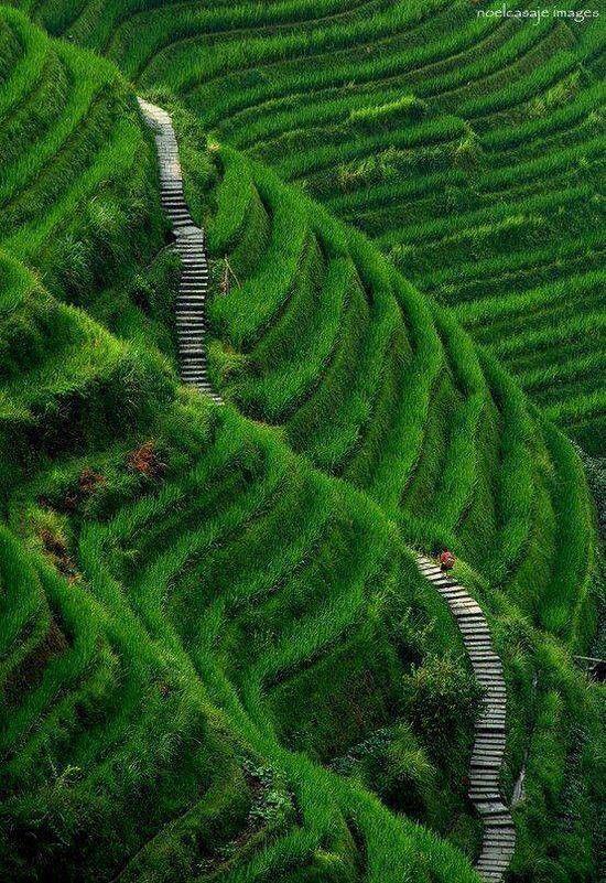 Rice terrace , China