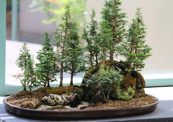 盆景是使用容器中生长的树木的日本艺术形式。其他文化中也存在类似的做法