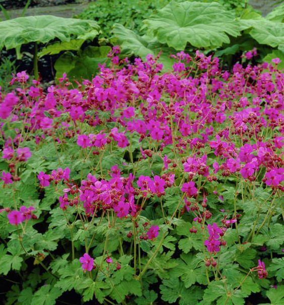 看看这18个开花地被植物,你会在这个名单上找到一些最好的低生长植物,它们不仅容易生长,而且看起来也很漂亮。