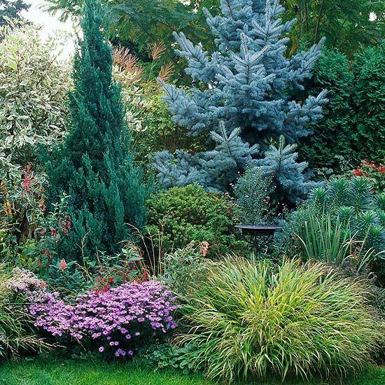 将常青树添加到您的院子里,创造一个全年的节目。获取如何与这些植物景观的想法。