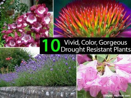似乎在全国某个地区会遇到干旱的情况。即使有这样的条件,我们仍然需要在景观中的颜色。在众议院逻辑他们已经放在一起幻灯片显示10个抗旱植物,提供颜色。你有什么在你的风景?看看下面的链接10 ...颜色抗旱的植物图像:#1 | #2 | #3 | #4