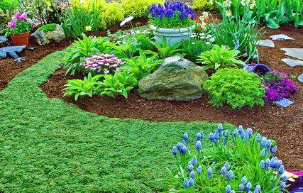 """胸腺serpyllum""""小精灵""""百里香很好的草坪更换,并在开花时有美丽的花朵。"""