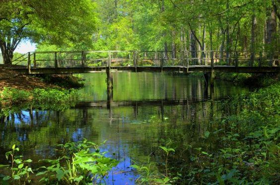 从山脉到低地,南卡罗来纳州是徒步旅行者的天堂。