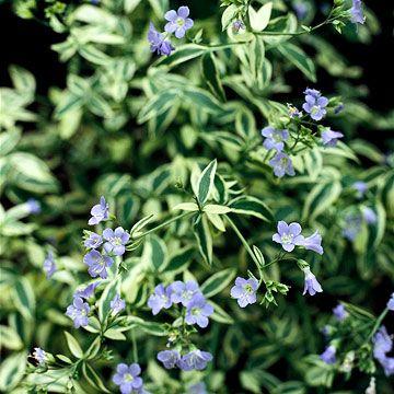 将这些易于种植的本土植物添加到您的花园中,在季节中提供大量低维护颜色。