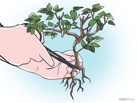 如何修剪盆景。盆景是日本人用小容器种植小型树木的做法。盆景的艺术主要在于种植者塑造树木的能力,以控制和指导树木的生长。出于这样的原因,...