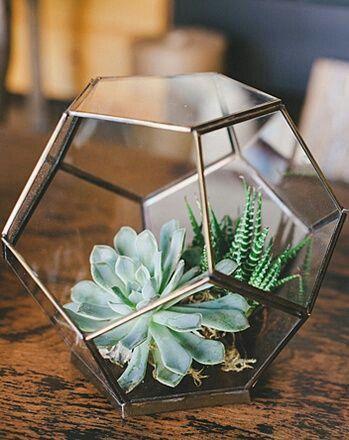 Imagen de caring,家居装饰和植物手工家具植物/花卉/多汁/仙人掌/花园