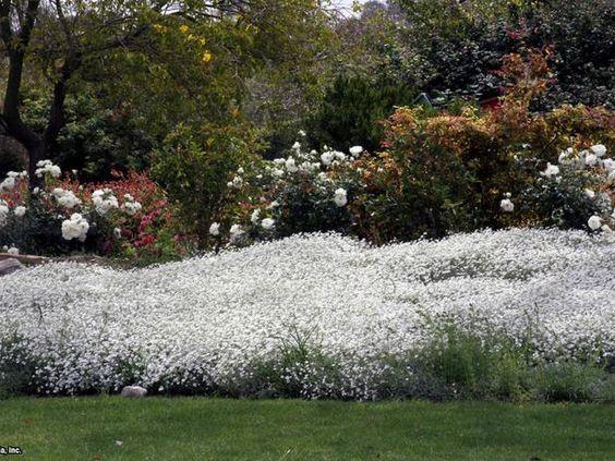 DIYNetwork.com景观专家提供了12个低维护的地被和植物,可以用来取代草。