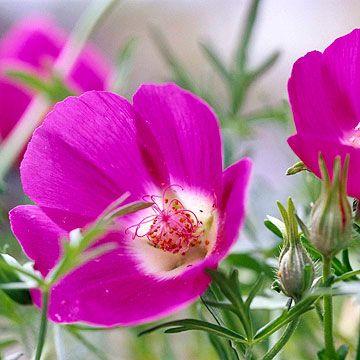 这些坚韧的本土植物为您的院子添加低维护美容。