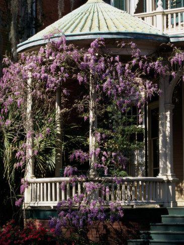 在佐治亚州萨凡纳的栗子屋上的紫藤