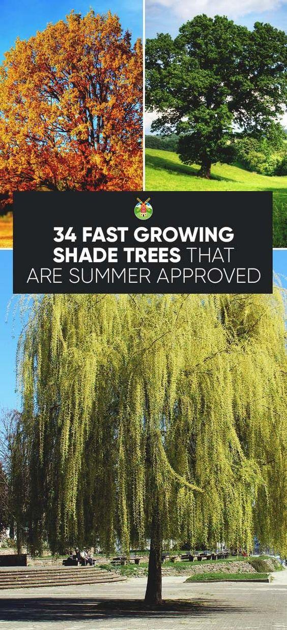 我们为快速增长的遮荫树提供超过30种不同的选择,帮助打败今夏家中的高温,同时提供美丽和个性。