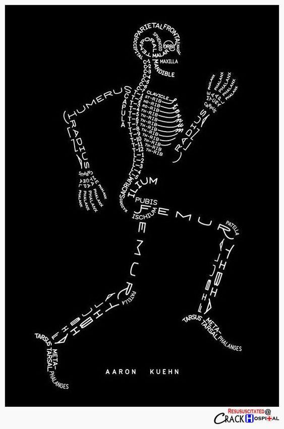 骨骼版式设计图片