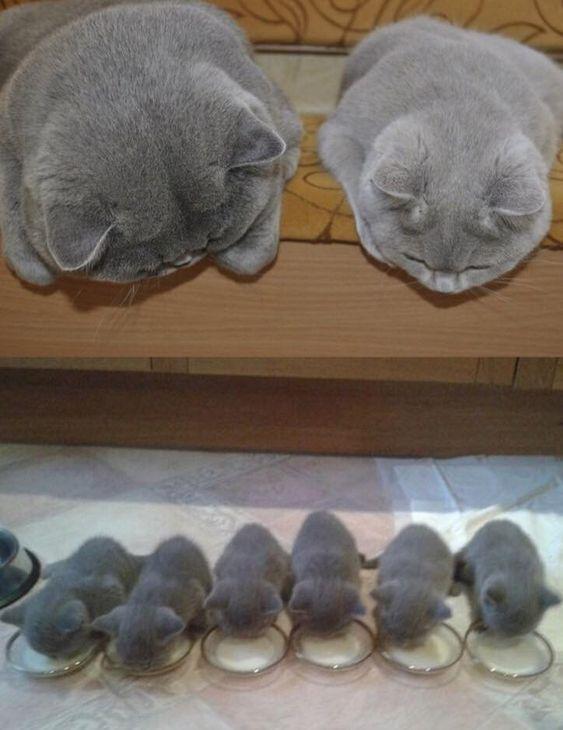 妈妈和爸爸看着他们的小猫! http://t.co/0zsoMN5Ckw...
