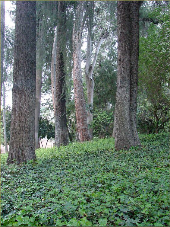 树木在任何景观设计中都成为有吸引力的焦点,但树干周围的地面常常是个问题。但是在那里种一圈有吸引力的地面覆盖物呢?在本文中了解更多信息。