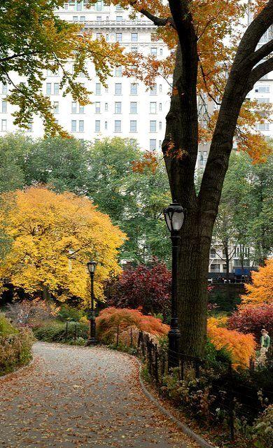 在池塘附近,中央公园,NYC