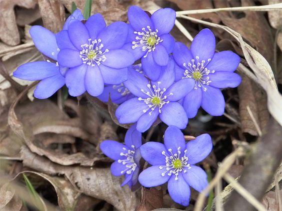 你的遮荫花园不必平淡无奇!使它变得丰富多彩,而且采用这些选择最好的开花遮荫植物。