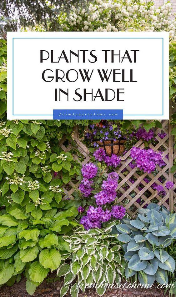这些开花的多年生植物和灌木非常适合您的阴凉花园,需要一些颜色来照亮它。了解我们在阴凉处生长的最佳植物的选择。
