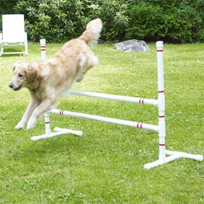 为你的狗建立这个易于组装的敏捷课程,并看着他变得更快乐,更健康,更聪明